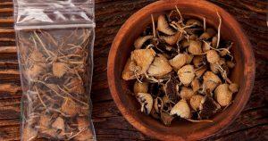 B+ mushrooms